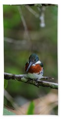 Beach Towel featuring the photograph Male Amazon Kingfisher by John Haldane