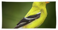 Male American Golden Finch On Twig Beach Towel