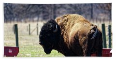 Male Bison Beach Towel