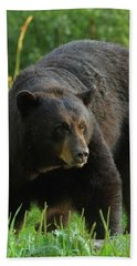 Beach Towel featuring the photograph Male Black Bear In Late Light by Coby Cooper