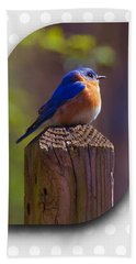 Male Bluebird Beach Towel