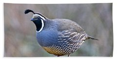 Male California Quail Beach Sheet