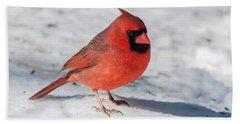 Male Cardinal In Winter Beach Towel
