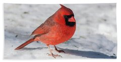 Male Cardinal In Winter Beach Sheet by Kenneth Cole