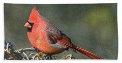Male Cardinal Beach Towel by Ken Everett