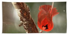 Beach Towel featuring the photograph Male Cardinal Take Off by Darren Fisher