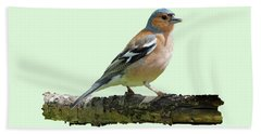 Male Chaffinch, Green Background Beach Towel