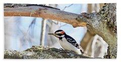 Male Downey Woodpecker 1112 Beach Sheet by Michael Peychich
