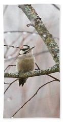 Male Downey Woodpecker Beach Sheet by Michael Peychich