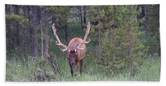 Bull Elk Rmnp Co Beach Towel