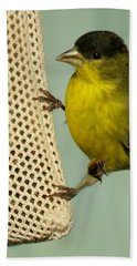 Male Goldfinch On Sock Feeder Beach Towel