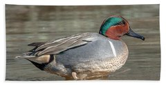 Male Green-winged Teal Dwf0171 Beach Sheet