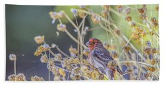 Male House Finch 7335 Beach Sheet by Tam Ryan