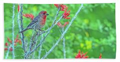 Male House Finch 8347 Beach Sheet by Tam Ryan