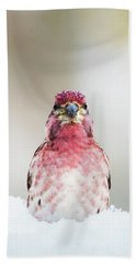 Male House Finch Beach Towel