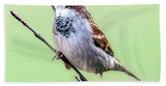 Male House Sparrow Profile Beach Sheet