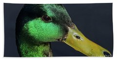 Beach Towel featuring the photograph Male Mallard Duck Anas Platyrhynchos Portrait  by Sue Harper