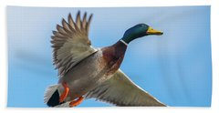 Male Mallard Fly By Beach Towel by Jeff at JSJ Photography