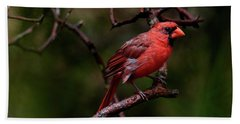Male Northern Cardinal Beach Towel