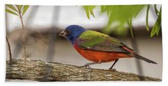 Male Painted Bunting Beach Towel