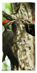 Male Pileated Woodpecker At Nest Beach Towel by Mircea Costina Photography