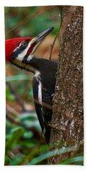 Male Pileated Woodpecker Beach Sheet