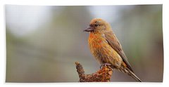 Male Red Crossbill Beach Towel by Doug Lloyd