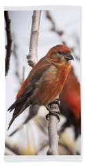 Male Red Crossbills Beach Towel by Robert Potts