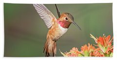 Male Rufus Hummingbird Beach Towel