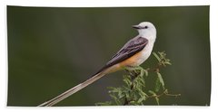 Beach Towel featuring the photograph Male Scissor-tail Flycatcher Tyrannus Forficatus Wild Texas by Dave Welling