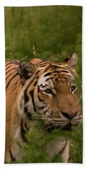 Male Tiger Beach Towel