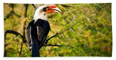 Male Von Der Decken's Hornbill Beach Towel