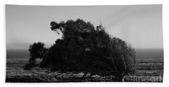 Beach Towel featuring the photograph Malformed Treeline by Clayton Bruster