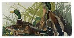 Mallard Duck, 1834  Beach Towel