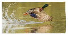 Mallard Duck 1952-112017-2cr Beach Towel