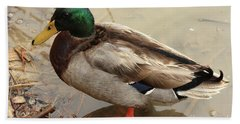 Beach Sheet featuring the photograph Mallard Duck by Kim Henderson