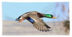 Mallard Flying Over Beach Towel