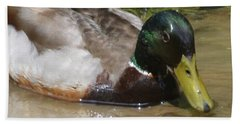 Beach Towel featuring the photograph Mallard Madness by Kathy Kelly