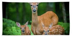 Mama And Fawns Beach Towel