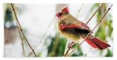 Mama Cardinal Beach Towel