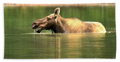 Beach Towel featuring the photograph Many Glacier Moose 1 by Adam Jewell
