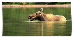 Beach Towel featuring the photograph Many Glacier Moose 2 by Adam Jewell