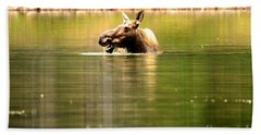 Beach Towel featuring the photograph Many Glacier Moose 3 by Adam Jewell