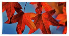 Maple Leaves In The Fall Beach Towel