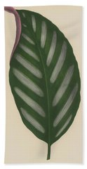 Maranta Porteana Beach Towel by English School