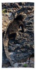Marine Iguana, Amblyrhynchus Cristatus Beach Sheet
