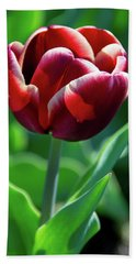 Maroon Tulip Beach Sheet