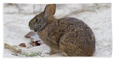 Marsh Rabbit On Dune Beach Towel