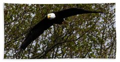 Beach Towel featuring the photograph Mature Bald Eagle by Sue Harper