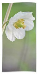 Mayapple Flower Beach Towel by JD Grimes